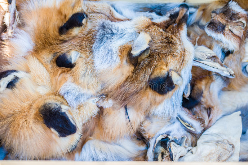 Fox pelts. At a local rendezvous festival stock image