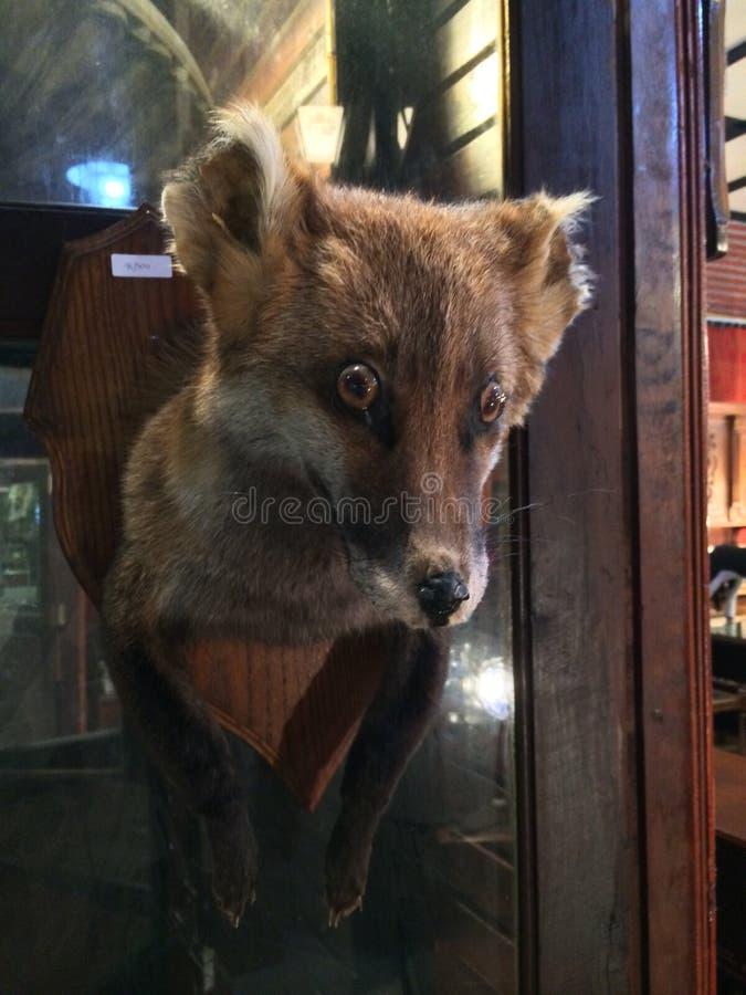 Fox personel zdjęcie stock
