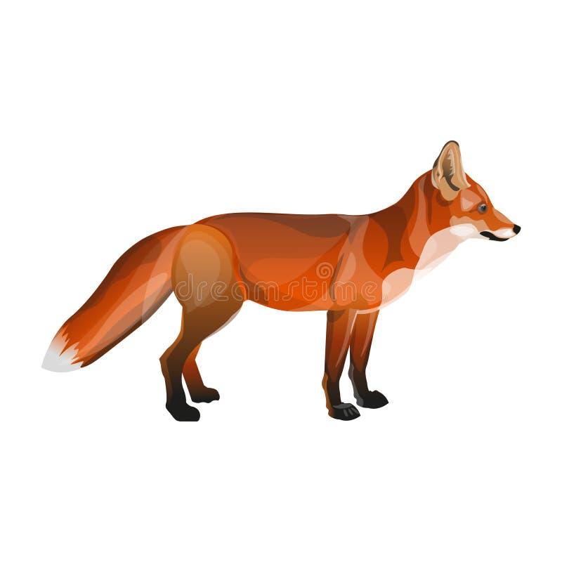 Fox rojo derecho stock de ilustración
