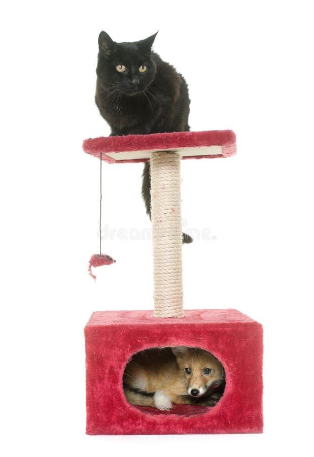 Fox y gato en el rasguño de los posts foto de archivo
