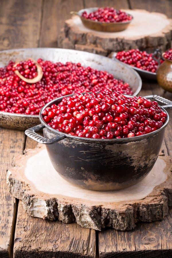 Foxberry selvagem da airela, lingonberry imagem de stock