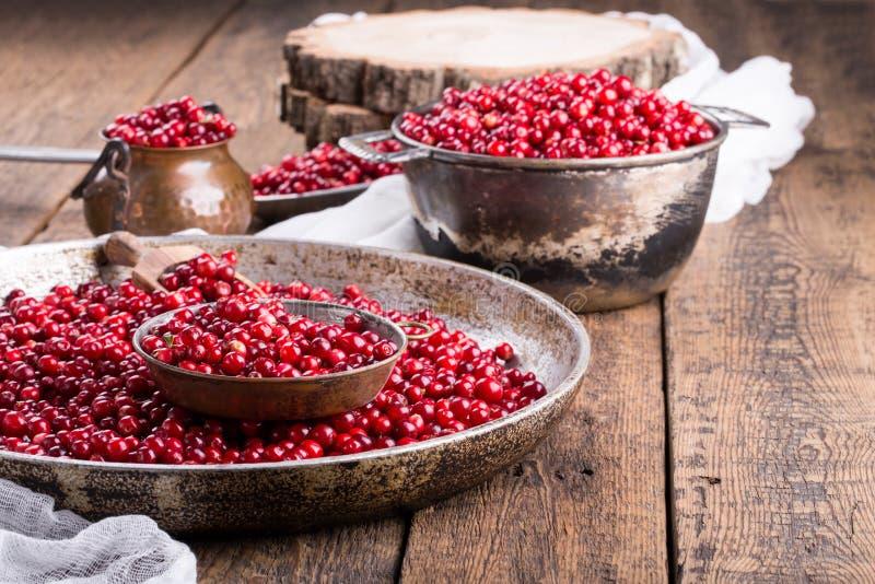Foxberry selvaggio dell'uva di monte, lingonberry fotografia stock libera da diritti