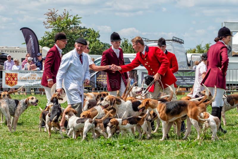 Foxhound e cani da lepre alla manifestazione della campagna di Hanbury, Worcestershire, Inghilterra fotografia stock libera da diritti