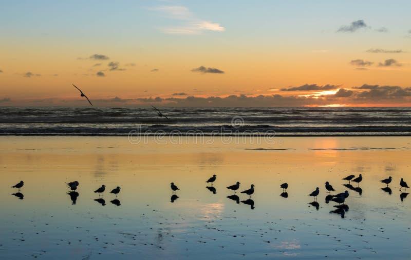 Foxton海滩鸟  免版税图库摄影
