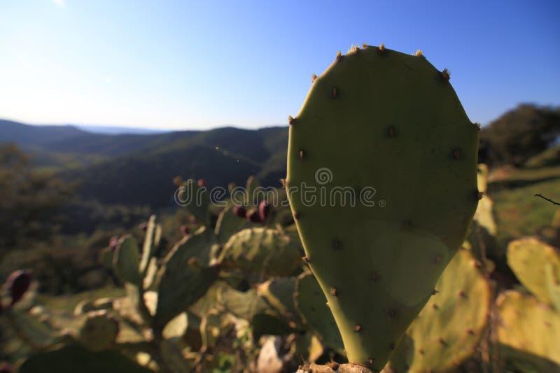 Foyer dans un grand cactus images libres de droits