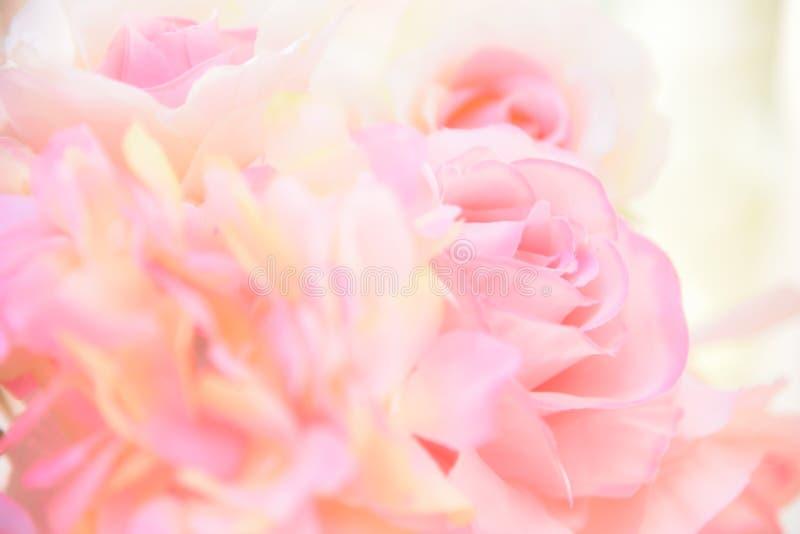 Foyer mou de roses roses sur le fond jaune blanc de tache floue photographie stock libre de droits