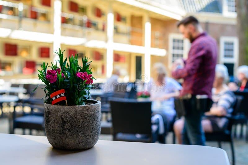 Foyer sélectif sur la belle plante en pot sur la table dans une rue images stock