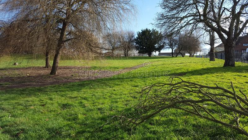 Frühling im Park lizenzfreies stockbild