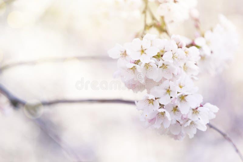 Frühlingsbaumblumen in der Blüte stockbild