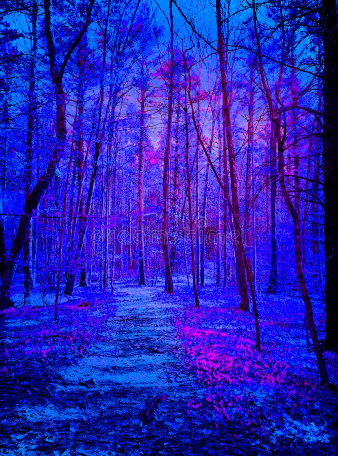 Främlingar som kommer i mörker - blått- och lilaskog arkivbilder