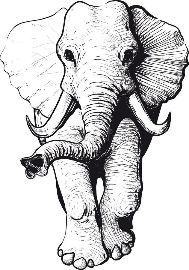 främre sikt för elefant vektor illustrationer