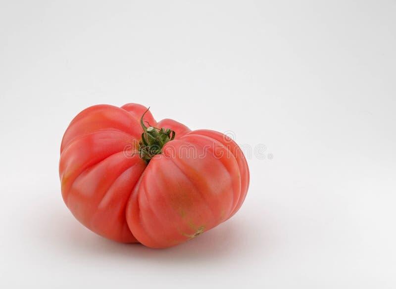 Främre sikt på den stora nya saftiga tomaten royaltyfri fotografi