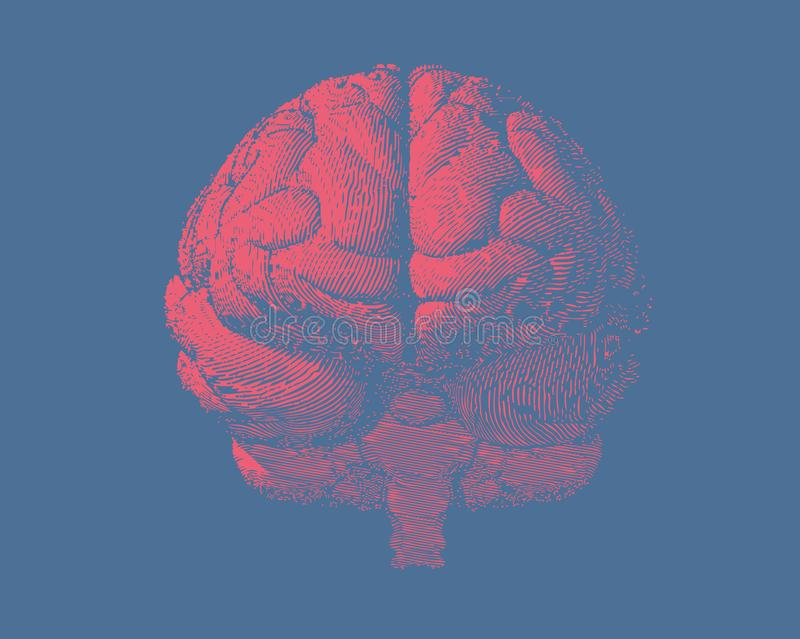 Främst sikt för gravyrhjärnillustration på blått BG stock illustrationer