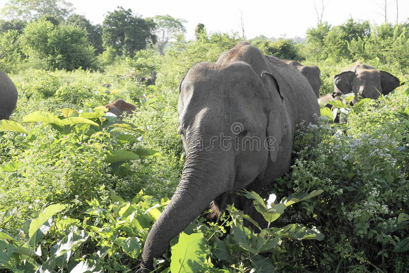 Frågvis elefant arkivbilder