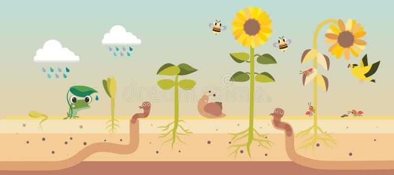 Från kärna ur till kärnar ur process för växttillväxt royaltyfri illustrationer