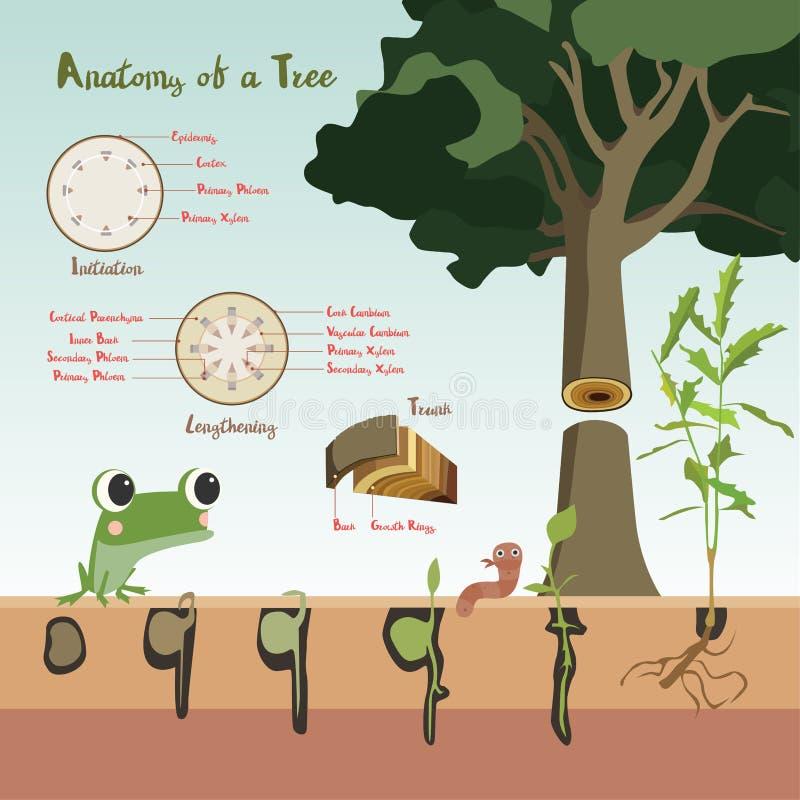 Från kärna ur till kärnar ur process för växttillväxt stock illustrationer