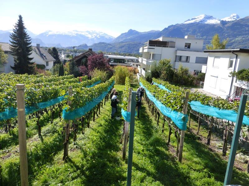 Från Liechtenstein härligt land royaltyfri fotografi