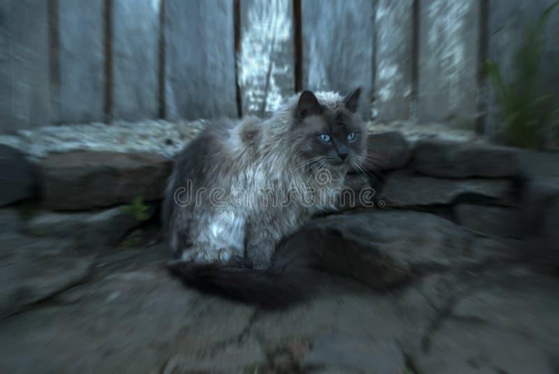 Från punkten för katt` s av sikten royaltyfri foto
