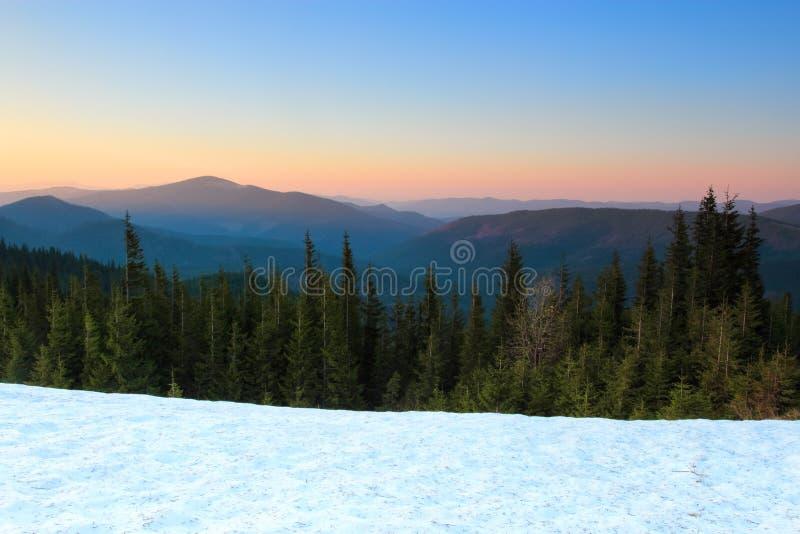Från snön öppnar täckt gräsmatta en sikt av gröna granträd, höga berg med snö täckt blast, solnedgången, blå himmel arkivbild