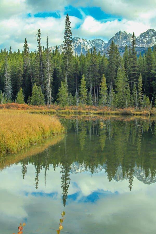 Från vägrenen parkerar den provinsiella sprejdalen, Alberta, Kanada royaltyfria bilder