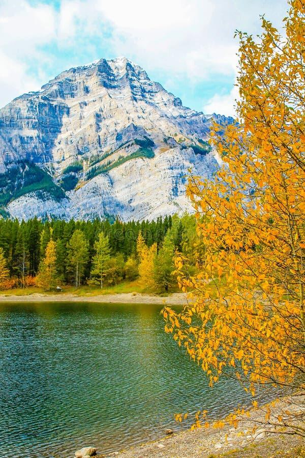 Från vägrenen parkerar den provinsiella sprejdalen, Alberta, Kanada royaltyfri bild
