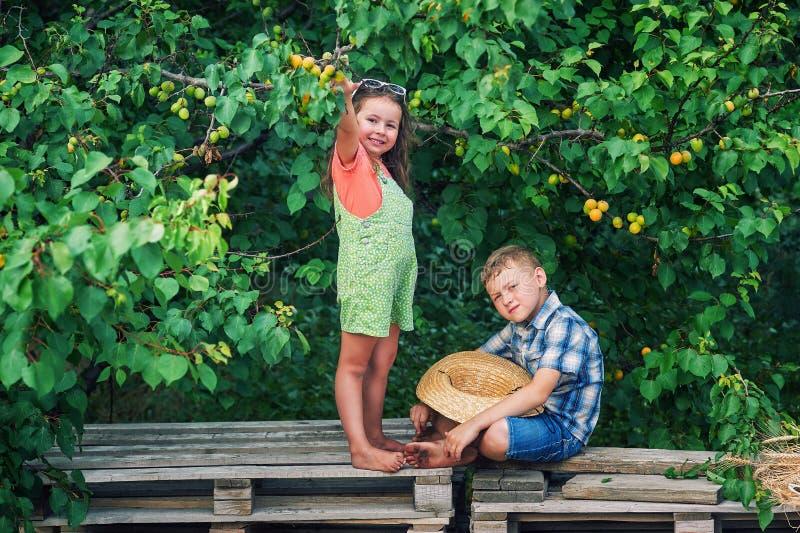 Frère et soeur drôles à l'arbre avec les abricots mûrs photographie stock libre de droits