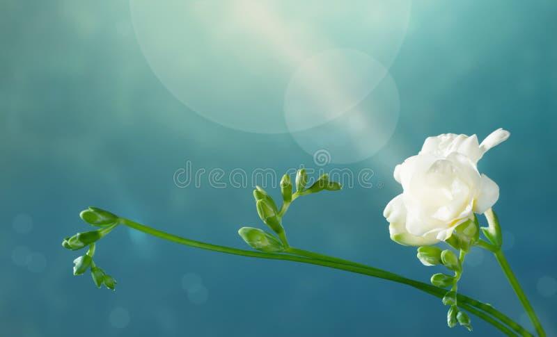 Frénésie blanche sur fond vert photo stock
