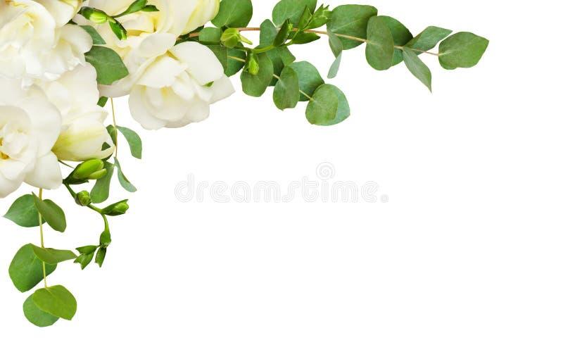 A frésia branca fresca floresce e o eucalipto sae em um canto AR imagens de stock royalty free