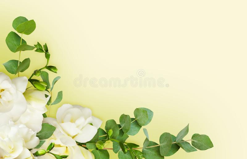A frésia branca fresca floresce e o eucalipto sae em um canto AR fotografia de stock