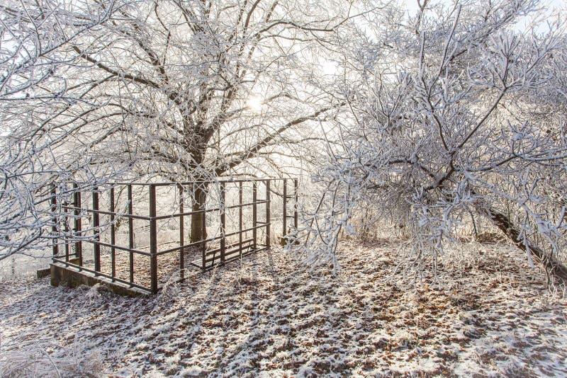 Frío nevoso congelado blanco de la naturaleza del paisaje de la escena mágica del parque del invierno fotografía de archivo