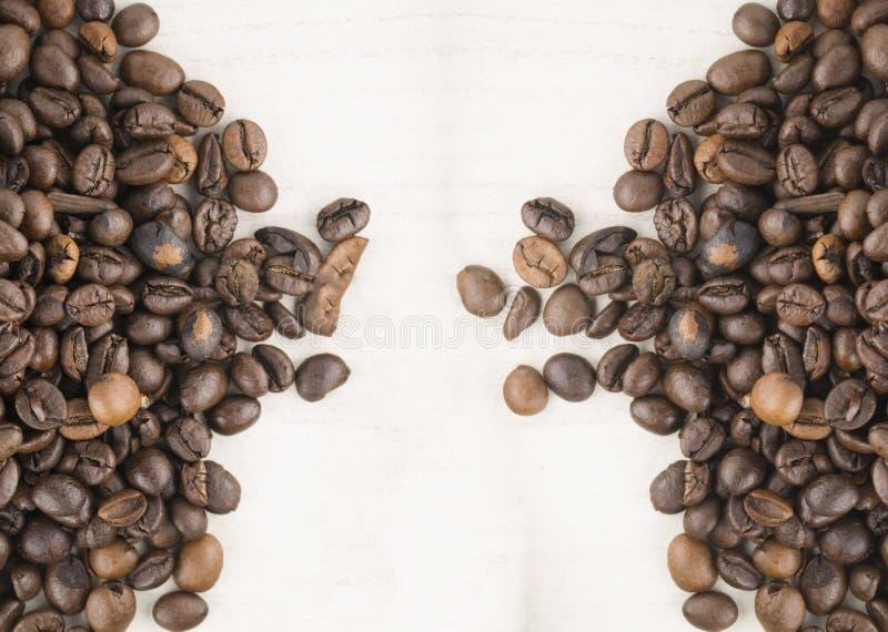 Frö av kaffe arkivbild