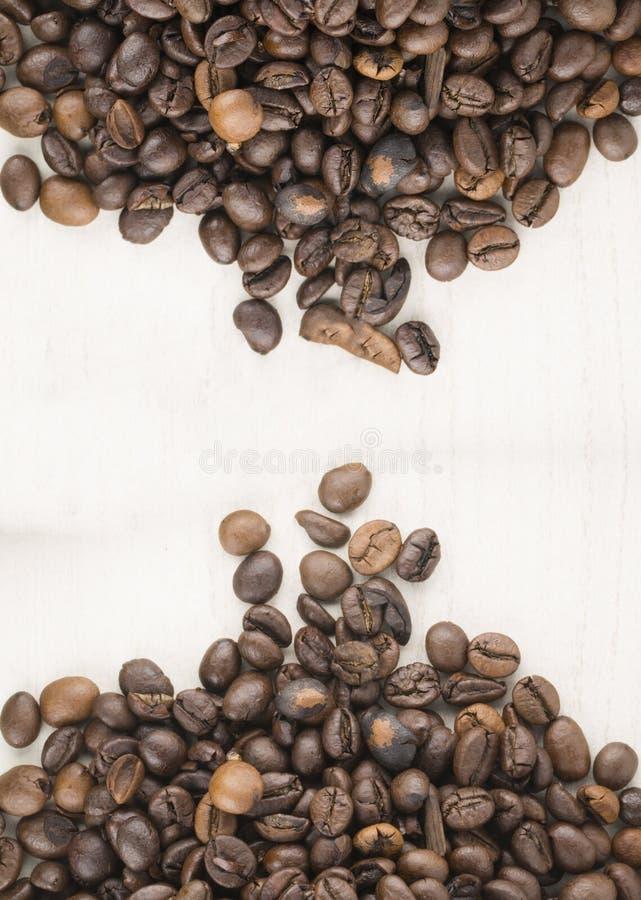 Frö av kaffe arkivfoton