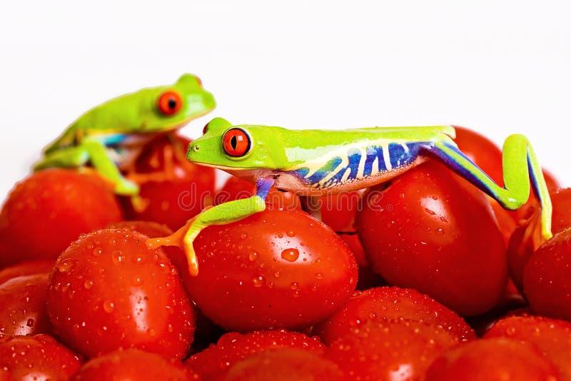 Frösche auf Tomate stockbild