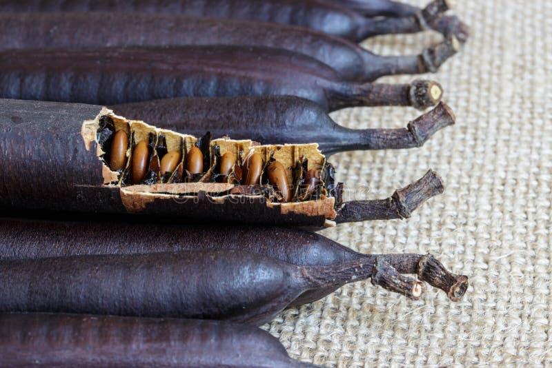 Früchte des goldene Duschbaums (Kassiefistel) stockfotos