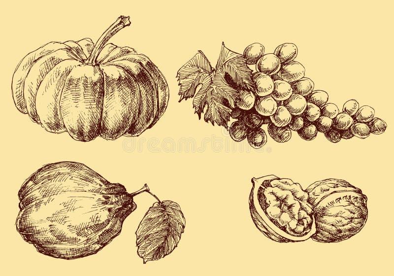Früchte eingestellt lizenzfreie abbildung