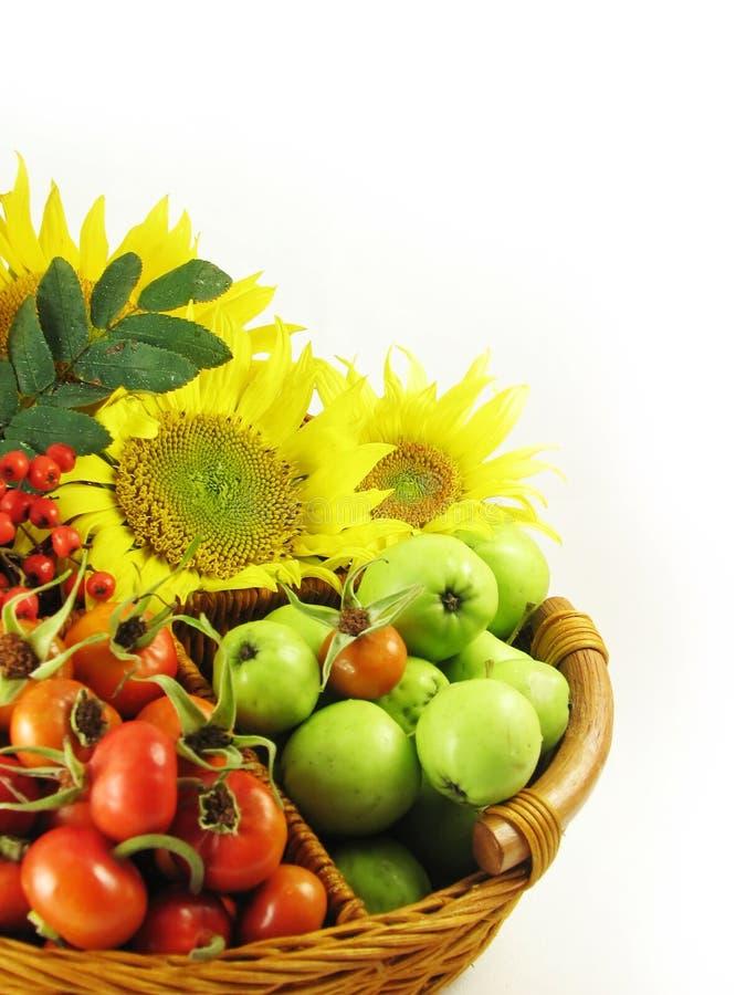 Früchte am Korbsommer stockbild
