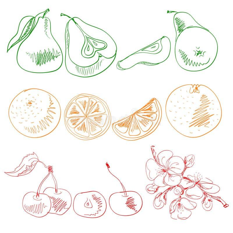 Früchte Und Beeren Gemalt Mit Farbigen Linien Stock Abbildung ...
