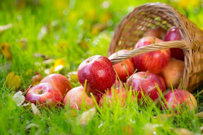 Früchte und Blumen im Herbst stockfotografie