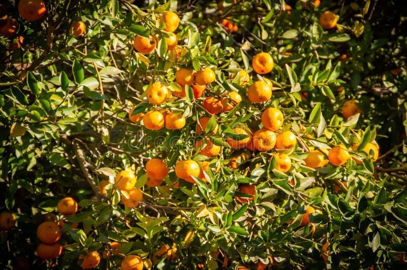 Früchte und ihre Verschiedenartigkeit in den Größen lizenzfreie stockfotos