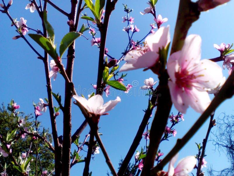 Frühblüten stockfoto