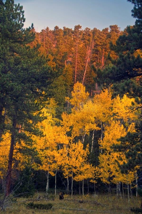 Frühe Herbst-Leuchte stockbilder