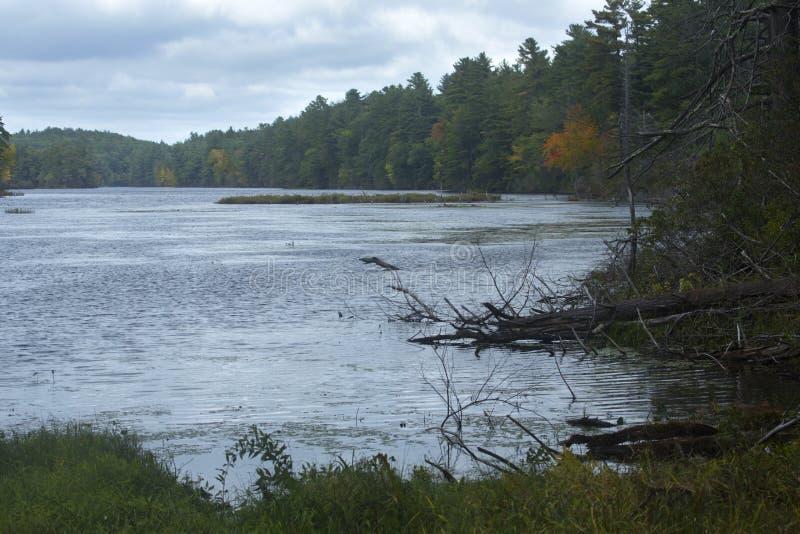 Frühe Zeichen des Falles in halsbrecherischem Teich im Verband, Connecticut lizenzfreies stockbild