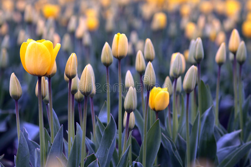 Früher Frühling lizenzfreie stockbilder