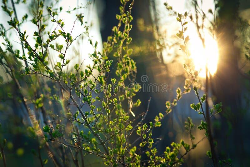Früher Frühling stockfotos