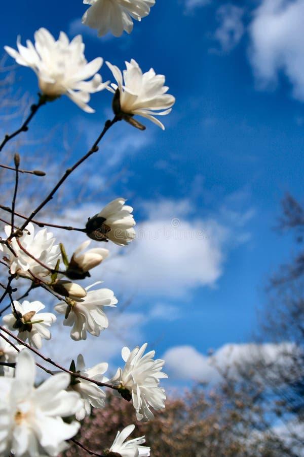 Früher Frühling lizenzfreie stockfotos