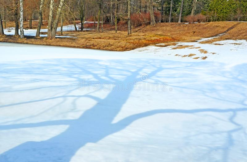 Früher Frühling Baumschatten stockbilder