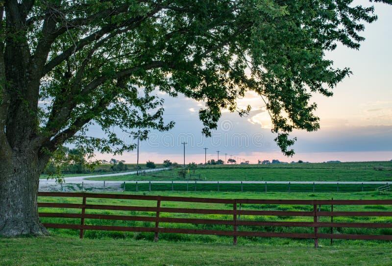 Früher Morgen auf dem Bauernhof lizenzfreie stockfotos
