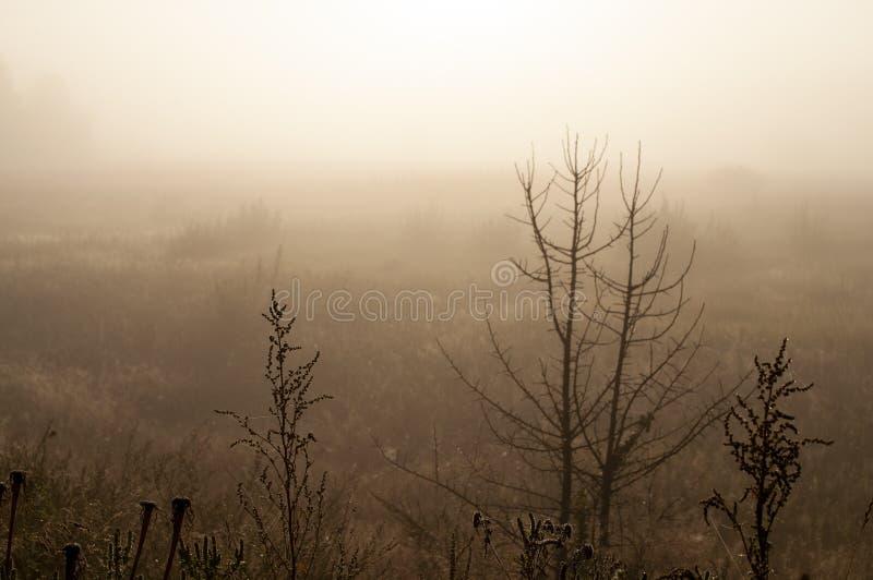Früher Morgen auf dem Gebiet mit Herbstnebel und Wassertropfen in der Luft Tönungen des Brauns Nichts konnte weit weg sehen Beaut lizenzfreies stockfoto