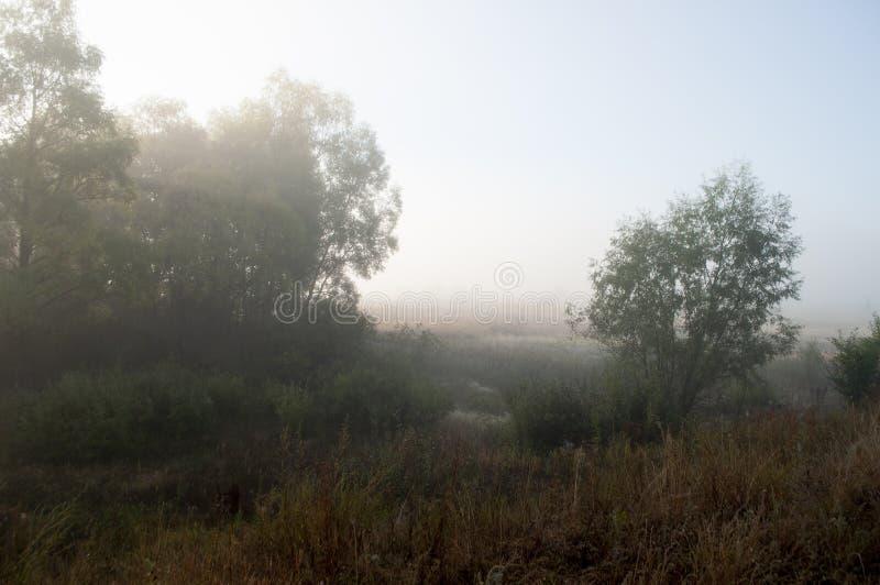 Früher Morgen auf dem Gebiet mit Herbstnebel und Wassertropfen in der Luft Tönungen des Brauns Nichts konnte weit weg sehen Beaut stockfotos