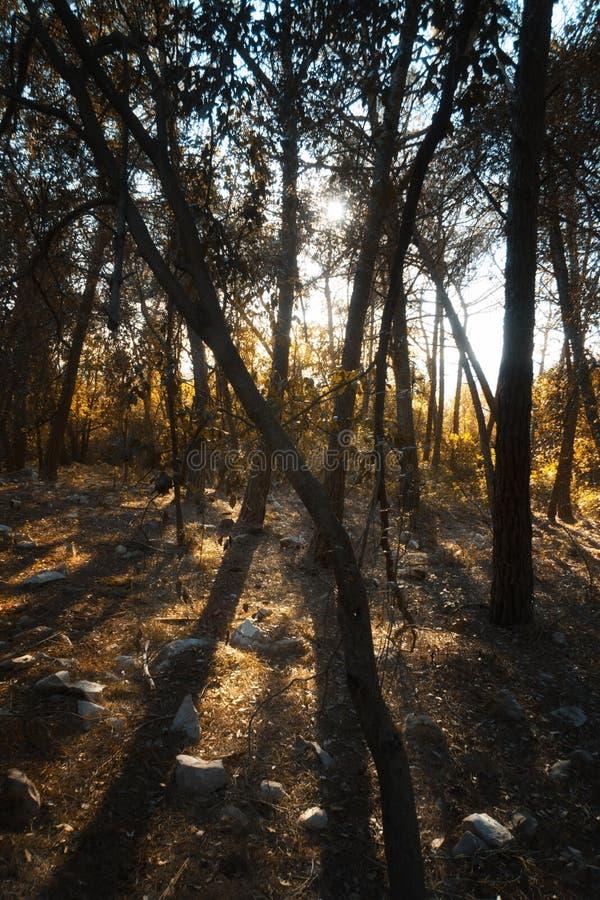 Früher Morgen auf dem Wald stockfotografie